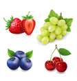 berry collection grape strawberry blueberry vector image vector image