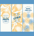 orange fruit banner set hand drawn fruit vector image vector image