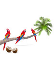 palm tree with parrots vector image vector image