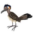 Wild bird on white background vector image vector image