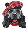 dog American Cocker Spaniel in Scottish Tam vector image vector image