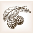 Raspberry hand drawn sketch style vector image