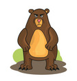 cartoon angry bear isolated on white vector image