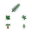 flat icon natural set of spruce leaves jungle vector image