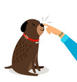 girl hand touches dogs nose vector image vector image