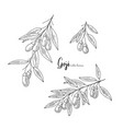 goji berry drawing set isolated hand drawn vector image vector image