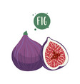 hand-drawn of fig fruits sliced and whole cartoon vector image