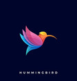 hummingbird template vector image