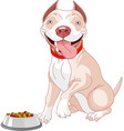 hungry pit-bull vector image vector image