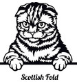 scottish fold cat - cat breed cat breed head vector image vector image