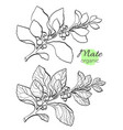 set mate branch 2 vector image vector image