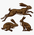 wild hares rabbits are sitting and jumping vector image vector image