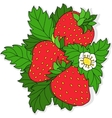Ripe juicy strawberries vector image