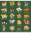 isolated edible natural mushrooms in nature vector image vector image