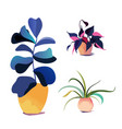 potted houseplant collection various vector image