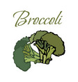 tasty veggies broccoli vector image