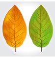 tobacco vector image vector image