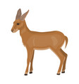 a young wild antelope wild-footed animal