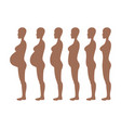 stages of development of pregnancy of the woman vector image