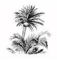 Hand Drawn Sketch Palm vector image vector image