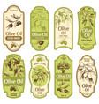olive oil label premium extra virgin oils black vector image