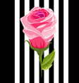pink rose bud isolated flower vector image