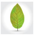 tobacco leaf icon vector image vector image
