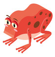 3d design for red frog vector image vector image