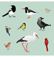 Bird collection vector image vector image