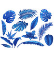 blue tropical leaves exotic palm tree leaf vector image vector image