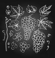graphic bunches grapes leaves and branches vector image