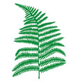 green fern leaf hand painted realistic forest vector image