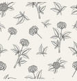 lovely botanical seamless pattern with ginseng vector image vector image