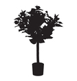 Office and house rose tree silhouette vector image