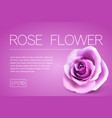 realistic pink rose on white background vector image vector image