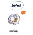 scallop watercolor vector image vector image