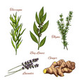 sketch icons of spices and herbs vector image vector image
