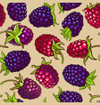 boysenberry berries pattern on color vector image vector image