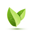 green leaf icon organic eco symbol nature vector image vector image