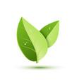 green leaf icon organic eco symbol nature vector image