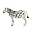 african desert zebra wild cloven-hoofed animal vector image