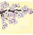 Branch of hand drawn cherry blossom vector image