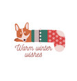 cute little dog sleeping in christmas stocking vector image
