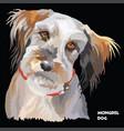 Fluffy dog colorful portrait