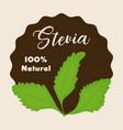 stevia concept design vector image vector image