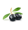 two black olive with leaf vector image vector image
