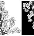 Black and white background with flowering apple vector image vector image