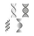 dna icon set chromosome strand symbol vector image vector image