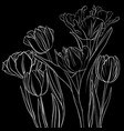 drawing flowers of tulip vector image vector image