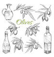 olives sketch icons of olive oil product vector image vector image